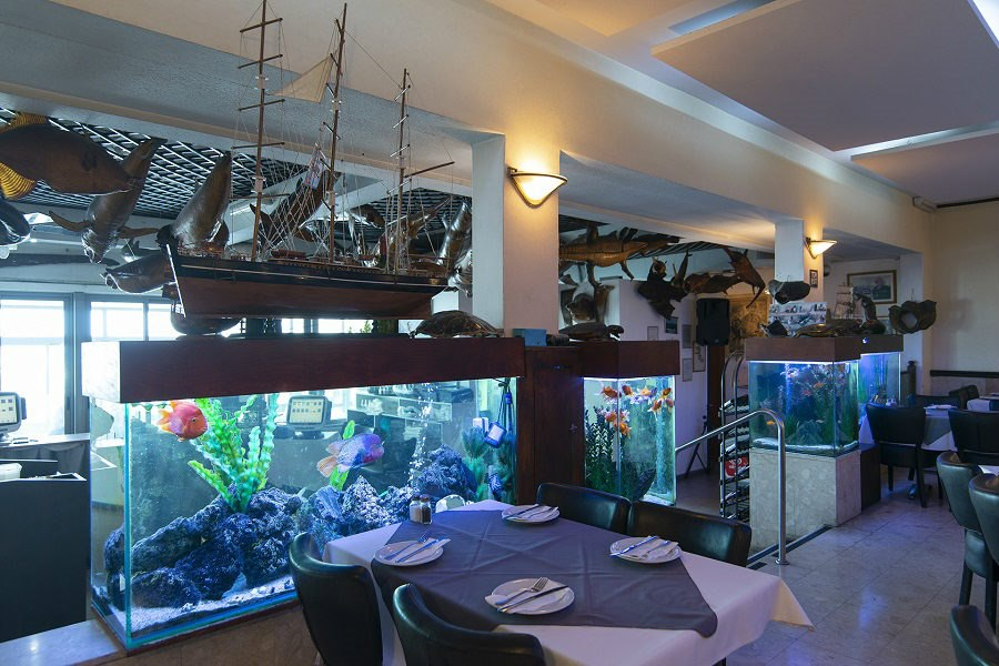 מסעדות דגים ביפו