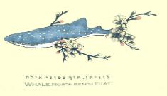 לוויתן whale