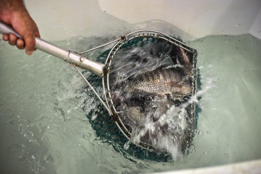 תמונה של מסעדת דגי הקיבוצים - 1