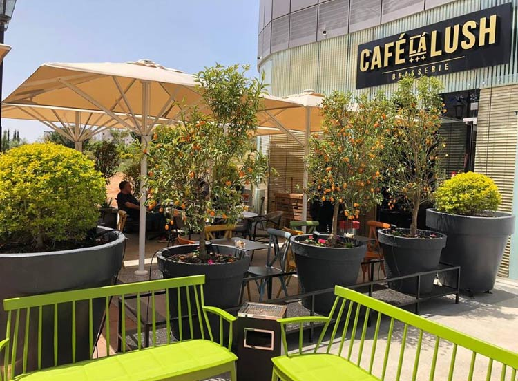 תמונה של קפה ללוש - 3