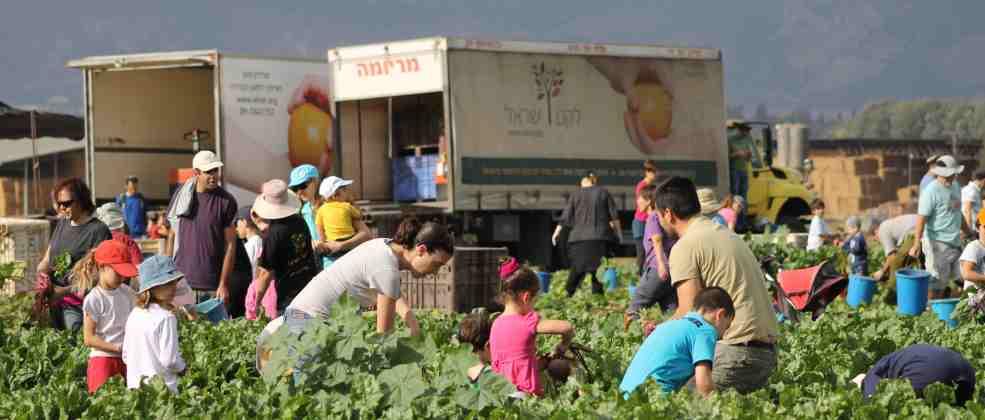 איסוף מזון בארגון לקט ישראל (צילום: באדיבות לקט ישראל)